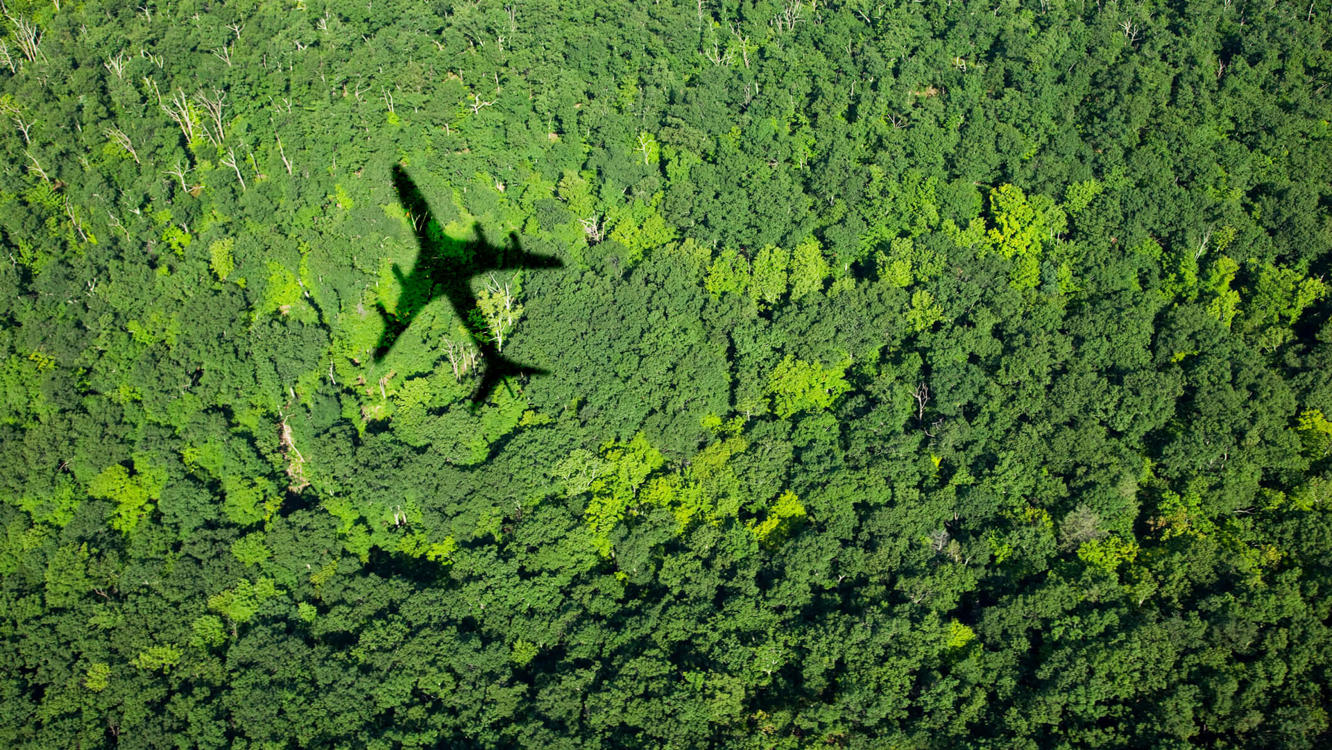CORSIA and carbon offsetting: A look at the challenges and opportunities